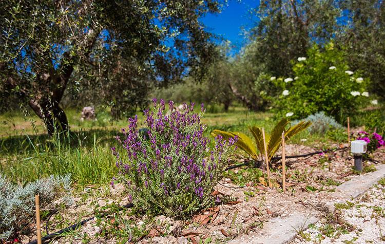 Giardino con piante aromatiche